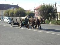 Koníci z povozem jedoucí po náměstí