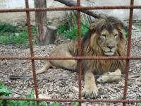 Jedinečný svět exotických zvířat – Zoo Dvorec