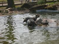Zoo Chomutov