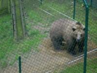 Méďové z pohádky – medvědárium Beroun