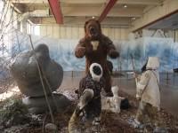 Medvěd jeskynní