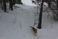 Svah a dovádějící pes