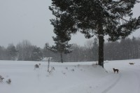 Sněhem zasypaná krajina