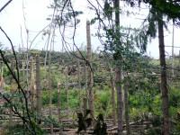 To nejsou sirky, to byly stromy