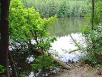 Rybník Vidlák