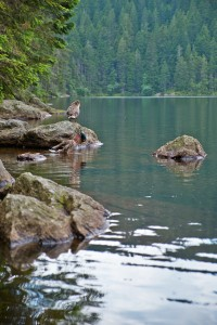 Jezera + Pancíř