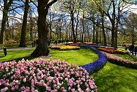 Nizozemsko (5): Keukenhof – holandská květinová zahrada