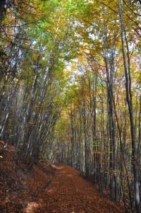 Chřiby (Buchlovské hory): podzimním lesem
