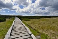 Krkonoše: Úpské rašeliniště