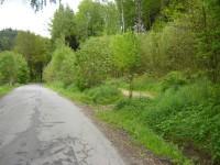 Zde odbočíme na lesní cestu