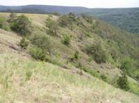 Mohelenská hadcová step - národní přírodní rezervace
