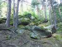 Skály v lese