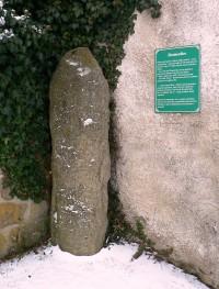 Družec - Zkamenělec