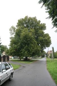 Tomáškova lípa v Moravské Hůzové
