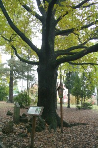 Schillerův dub na Kvádrberku