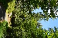 Čertovo jezero, Špičák, Černé jezero a Bílá strž