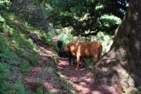 Přechod Madeiry (11) - pod vavříny a cedry až do Porto Moniz