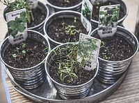 Máte rádi bylinky? Pak musíte mít rádi i bylinkové slavnosti