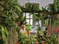 Tradiční výstava Orchidejí sukulentů a jiných exotických rostlin