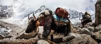 Expediční kamera 2016: Mizející národy, divoká příroda i extrémní výkony