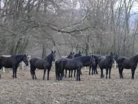 Švýcárna Slatiňany - Interaktivní muzeum starokladrubského koně