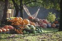 Podzimu v pražské botanické zahradě kralují dýně!