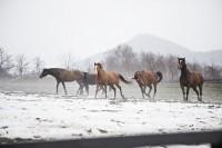 Relaxace u koní