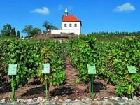 Troja: vinice sv. Kláry