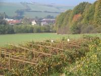 Vinařská stezka vinice Pod Sádkem; Foto: archiv vinařství Sádek