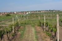 Pohled na Kobylí z vinice