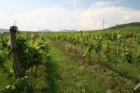 Foto: Litoměřice; archiv Vinařského fondu
