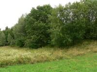 Keltské oppidum u Nasavrk