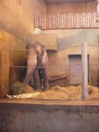 slon - zoo praha