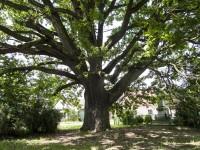 Újezd u Mohelnice – Císařský dub