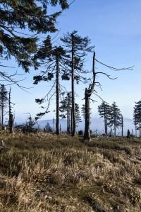 Pralesovitý les