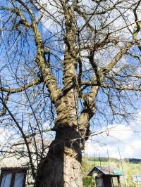 Vikýřovice – morušovník (a Kalvárie)