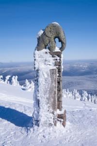 Slůně na Králickém Sněžníku