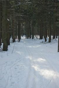 Stopa v lese
