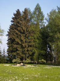Lázeňský park bude dějištěm akce