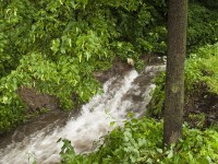 Javořický potok