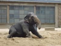 slon..