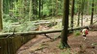 Stezka kolem pralesa je náročná