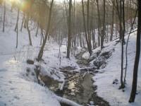Zimní křivoklátské lesy
