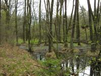 bývalý Holský rybník - vypuštěn při stavbě státní dráhy Břeclav - Praha