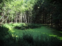 Lesní rybníček Barvínek