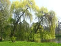 Procházka Kroměříží a jejími zahradami