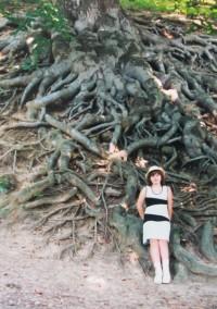 u nejdelších kořenů buku lesního