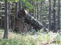 cestou od Karlovy studánky k Rolandovu kameni