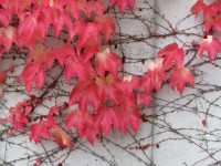 Procházka podzimním centrem Zlína