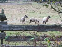 Do Držkové za ovečkami a  malebnými skalními zákoutími